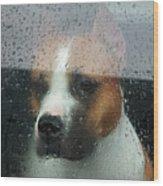 Faithful Dog Sitting In A Car And Wood Print