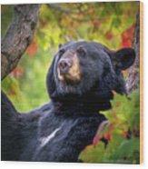 Fall Black Bear Wood Print