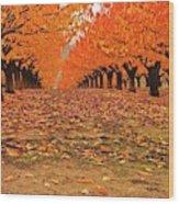 Fall Cherry Trees Wood Print