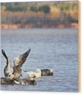 Fall Migration At Whittlesey Creek Wood Print