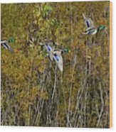 Fall Time Mallards Wood Print