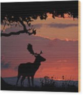 Fallow Stag At Sunset Wood Print