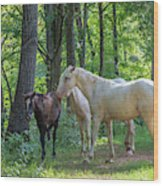 Family Of Horses Wood Print