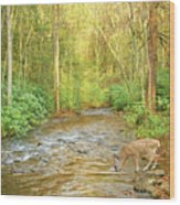 Fawn Drinking From Stream Wood Print