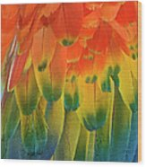 Feather Pattern, Scarlet Macaw Wood Print