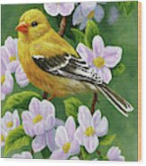 Female American Goldfinch And Apple Blossoms Wood Print