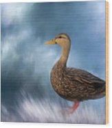 Female Mallard Duck Wood Print
