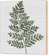 Fern Twig Illustration Grey Plant Watercolor Painting Wood Print