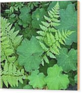 Ferns And Ladys Mantle Wood Print