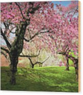Cherry Orchard Afternoon Wood Print