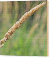 Field Grass Wood Print