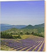Field Of Lavender Wood Print