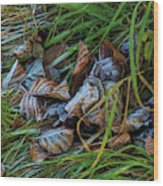First Frost In Sweden Wood Print