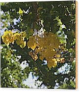 First Golden Leaves Wood Print