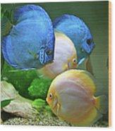 Fish In Water Wood Print