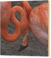 Flamingo Couple Wood Print