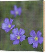 Flax Wildflowers Wood Print