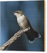 Flick Of The Tongue - Ruby-throated Hummingbird Wood Print