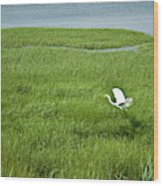 Salt Marsh Flight Wood Print