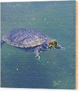 Floating Turtle Wood Print