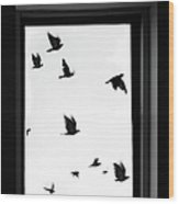 Flock Of Crows Seen Through A Window Wood Print
