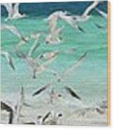 Flock Of Seagulls By Azure Beach Wood Print