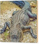 Florida Gator 2 Wood Print