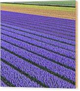 Flower Fields In Spring In Holland Wood Print