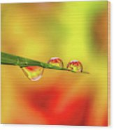 Flower In Water Droplet Wood Print