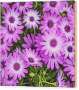 Flower Patterns Collection Set 04 Wood Print