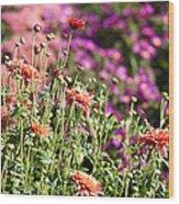 Flowerbed With Michaelmas Daisies Wood Print