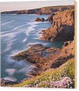 Flowering Sea Thrift Armeria Maritima Wood Print