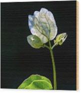 flowers of a Bougainvillea w4 Wood Print