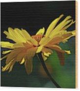 Flying Daisy Wood Print