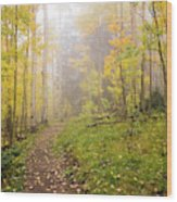 Foggy Winsor Trail Aspens In Autumn 2 - Santa Fe National Forest New Mexico Wood Print