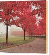 Forest Park Maple Corridor Wood Print