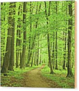 Forest Path Wood Print