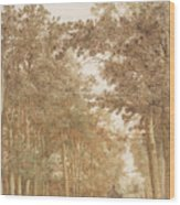 Forest Road Wi  Wood Print