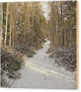 Forest Track In Winter Wood Print