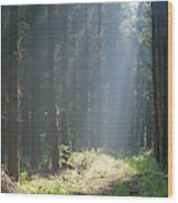 Forrest And Sun Wood Print