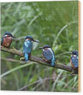 Four Kingfishers On Branch Wood Print