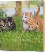Four Little Kittens Playing In Garden Wood Print