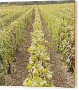 French Vineyards Of The Champagne Region Wood Print