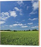 Fresh Air. Blue Skies Over Green Wheat Wood Print