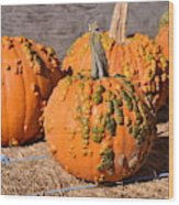 Fresh Butternut Pumpkins Wood Print