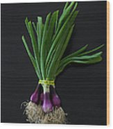 Fresh Organic Red Spring Onions Wood Print