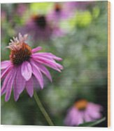 Frilly Hat Echinacea Wood Print