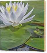 Frog And Lily Wood Print