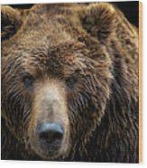 Front View Of Brown Bear Isolated Wood Print