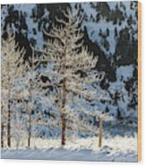 Frost Covered Trees On The Portage Glacier Highway Alaska Wood Print